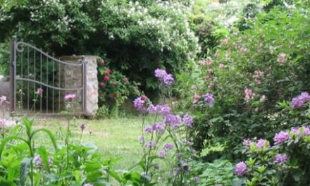 I Giardinieri BioEtici®: Una rete di professionisti a tua disposizione