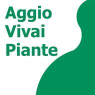 Vivai Aggio, Quinto di Treviso