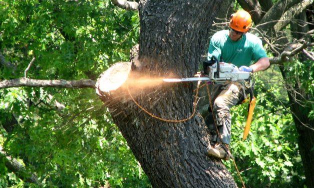 Afrim Qokaj, tree climbing Milano