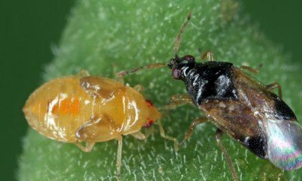 BioPlanet, insetti utili e lotta biologica