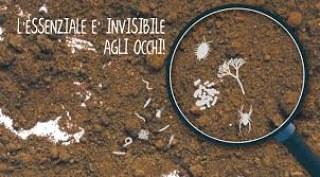 Influenza della Microflora sull'Assimilabilità dei Microelementi del Dott. Domenico Prisa