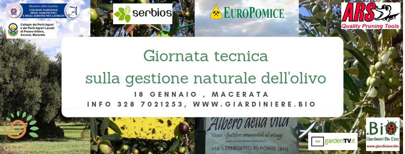 Gestione naturale dell'olivo: giornata tecnica a Macerata