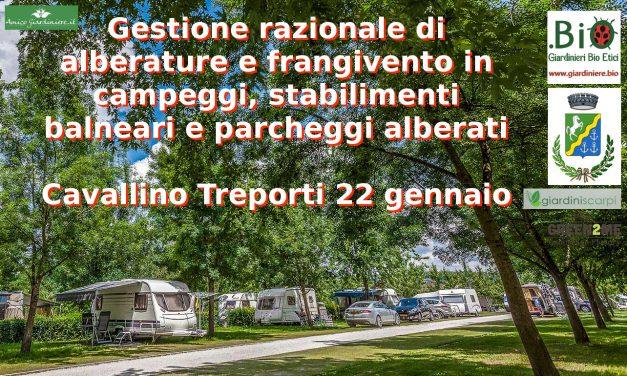 Gestione razionale delle alberature in campeggi e parcheggi a Cavallino Treporti (Venezia)