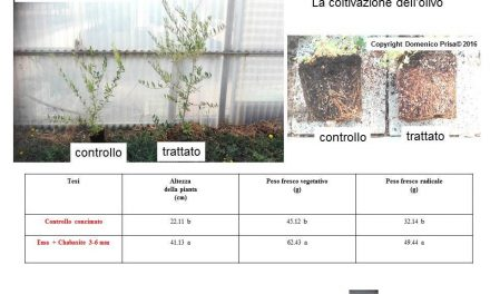 Olivo biologico: tecniche innovative per la coltivazione e la difesa del Dott. Domenico Prisa