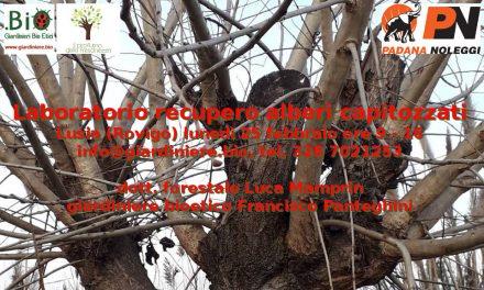Laboratorio recupero alberi capitozzati