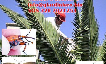 Campagna di informazione sulla difesa biologica della Palme da Paysandisia e Punteruolo Rosso