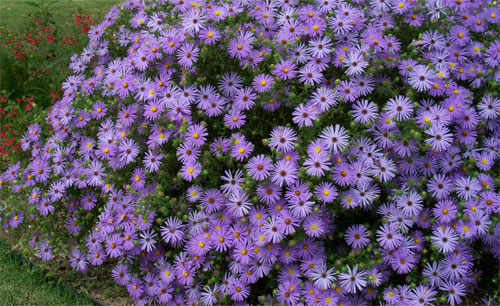 Qualche consiglio per una gestione naturale del giardino