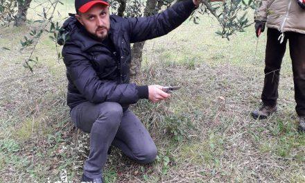 Marco Pulcino