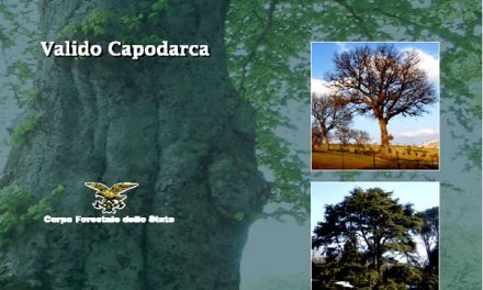 Valido Capodarca, una vita per gli alberi monumentali