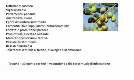 Caolino, clinoptilolite e chabasite per la difesa della mosca dell'olivo secondo Domenico Prisa