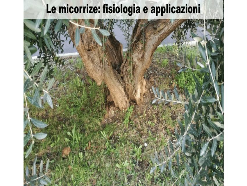 Le Micorrize: Fisiologia e Applicazioni del Dott. Domenico Prisa